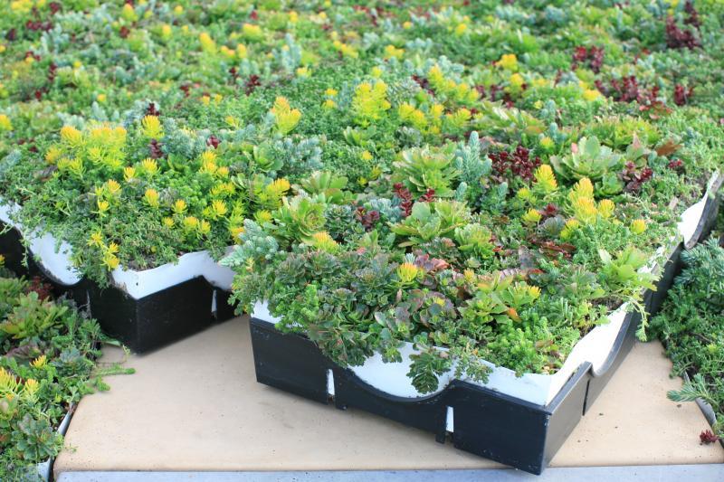 LiveRoof green roof